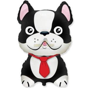 Пес с галстуком