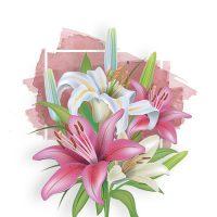 Купить лилии
